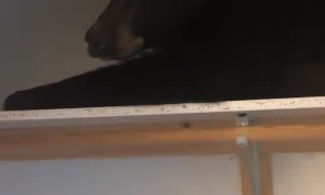 Family wakes up to find wild bear sleeping in their closet