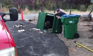 Heroic firefighter releases bear cubs trapped inside a dumpster