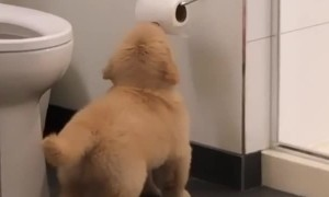 Puppy figures out how to play with the toilet paper roll