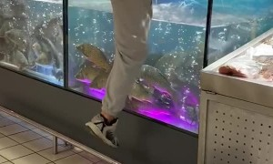 Man Dives Into Fish Tank After Engagement Ring