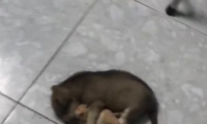 Sleepy Puppy Hugs Hamster Best Friend
