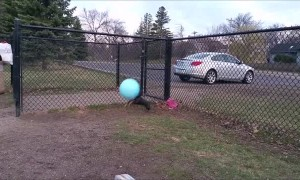 Doggo Jumps for Giant Ball