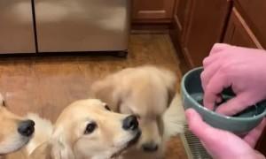 Dogs Eagerly Awaiting Their Air Treats