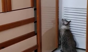 Clever Cat Can Open Doors