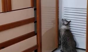 Clever Cat Can Open Doors