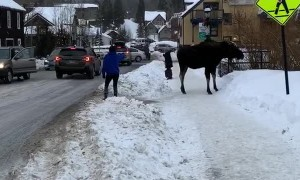 Moose Gives Girl Warning for Being Far Too Close