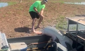 Fishermen Catch Massive Alligator Gar