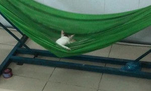 Hammock Keeps Kitty Happy