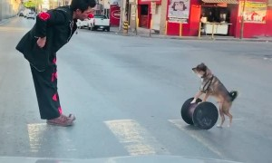 Talented Pup Performs Plenty of Tricks for Traffic
