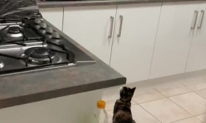Tinfoil Keeps Cats off the Counter