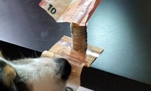 Doggo is a Master Thief