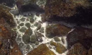 Galapagos Sea Lion Steals GoPro