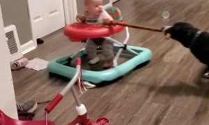 Baby Gets Towed in Walker By Canine Friend