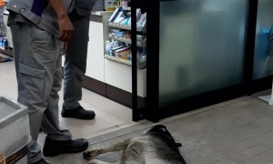 Sleepy Dogs Block Store Doorway