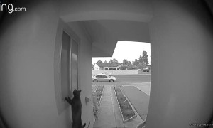 Doorbell Catches Attempted Break-In by Cat Burglar