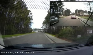 Duck Makes Impatient Driver Wait