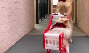 Dogs Last Minute Dash to the Shops