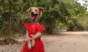 Pup in a Pretty Red Dress