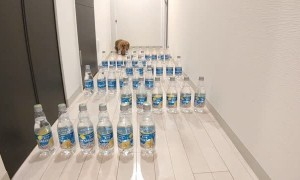 Doggo's Attempt Bottle Maze