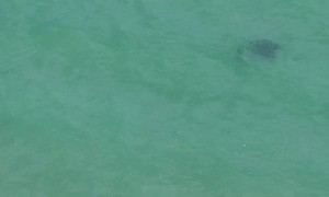 Man Observed Swimming Near A Stingray off Coast of Southeast Florida