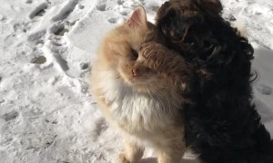 Kitty Enjoys Company of Playful Puppy