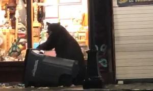 Bear Hides Behind Bin as Police Patrol Drives By