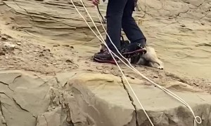 Rescuing a Dog from a Dangerous Cliffside