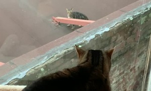 Cat Does Not Want to be Friends