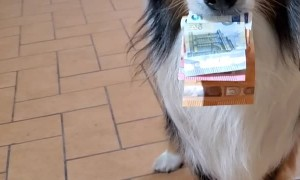 Doggo Pulls Three Notes From Coins