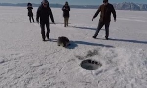 Seal Gets by with a Little Help