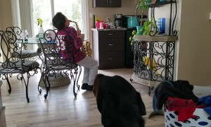 Dog Howls for the Saxaphone