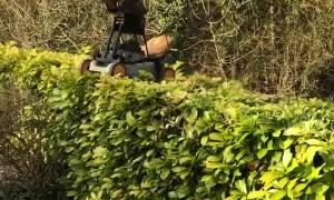 Creative Hedge Trimming During Quarantine