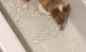 Dog Runs out of Room Doing Bath Time Zoomies