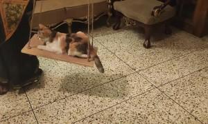 Kitty Enjoys Swinging the Time Away