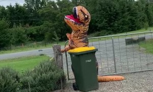 Taking out the Trash in a T-Rex Costume