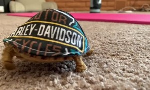 Mr Bob the Turtle Has Many Hats