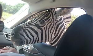 Referees Vs. Zebras