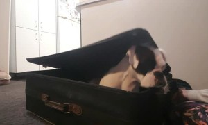Adorable Pup Packs Herself