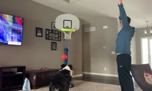 Dog Bounces Basketball into Hoop Off Its Nose