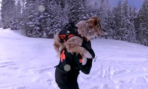 Rachel Training her Doggo Denali in Ski Patrol and Avalanche Rescue