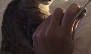 Kitty Relaxes for Pedicure