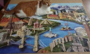 Ray, The Blind Cat Finishes Puzzle