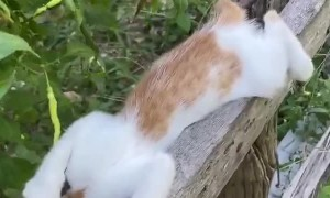 Kittens Pass out on Fence Post
