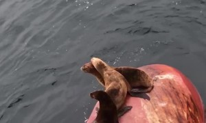 Seals Beach on Back of Stopped Ship