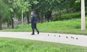 Houston cop leads chicks on mission to find their mother