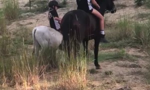 Little Girl Rides Rocky the Bull Calf