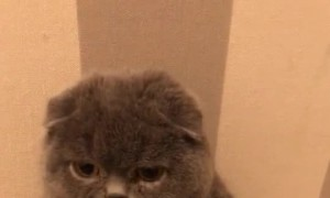 Adorable Cat Confronted about Its Current Weight