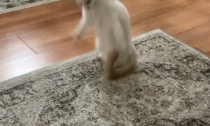 Cat Leaps for Playtime