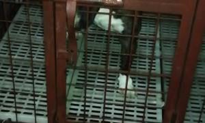 Dog has Become an Escape Artist