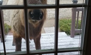 Sammy the Elk Pays a Visit